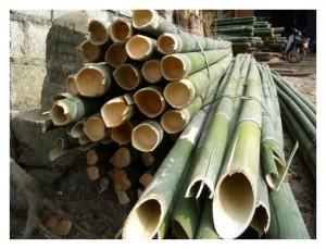 バングロ用慈竹を切り出したもの